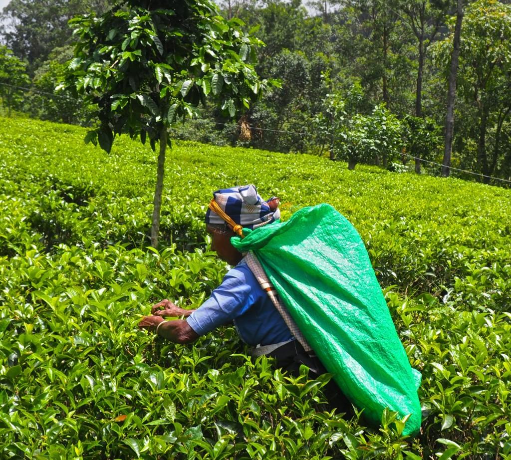 maduleklle-tea-and-eco-lodge