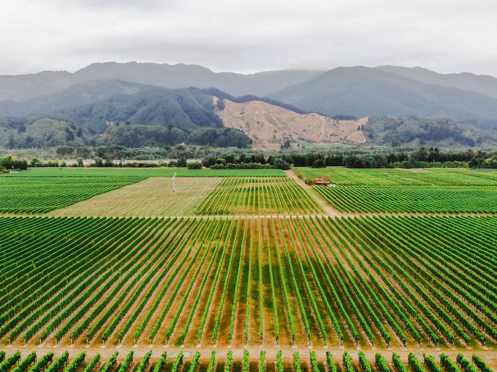 019_DJI_0137_019-Marlborough_wine_region